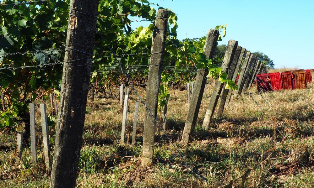 Bonnigal-Bodet-Vignerons–14-