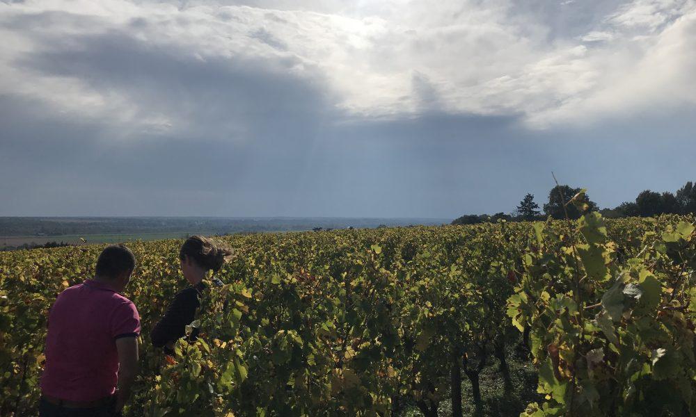 Bonnigal-Bodet-Vignerons–3–2