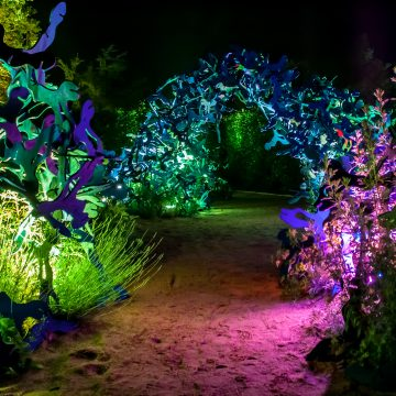 The garden lights