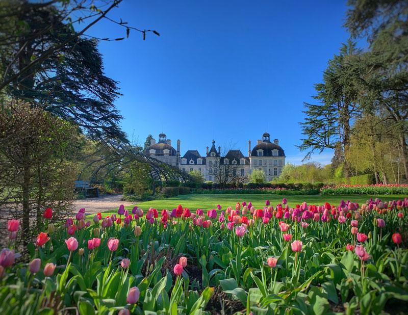 Tulip's gardens