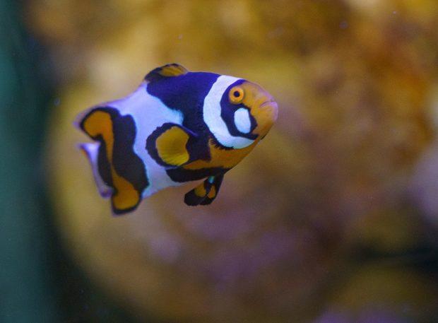 Loire Valley Aquarium